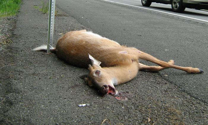 Roadkill porn